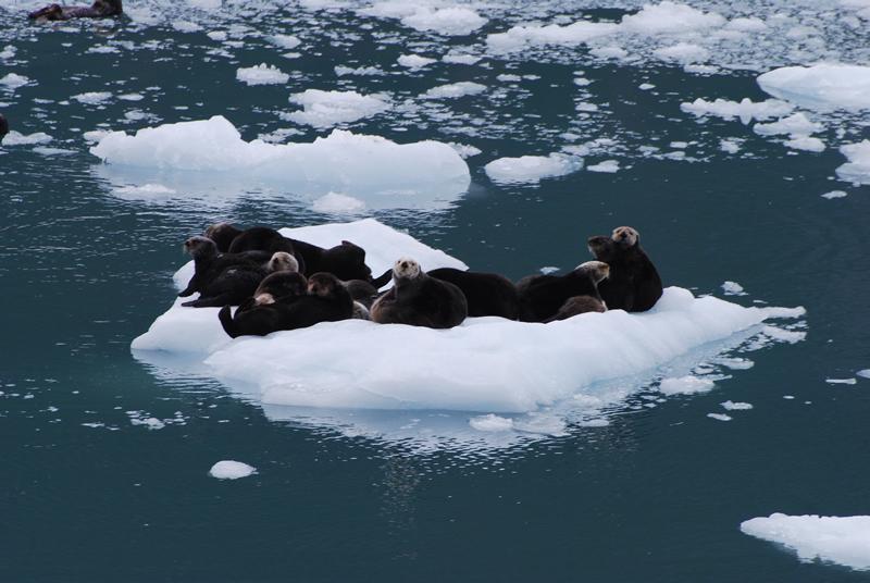 Winter Alaska Glacier Boat Tours